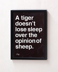 tiger sheep opinion sleep loose
